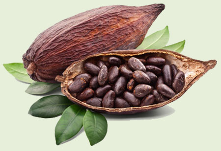 FREQUENTLY ASKED QUESTIONS ABOUT THE SUSTAINABILITY OF COCOA