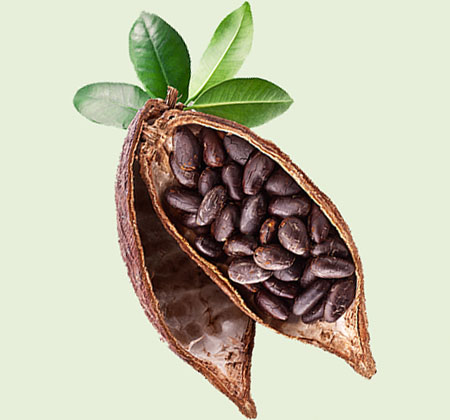 1. Cocoa production in the future?